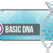 theta-healing-basis-seminar